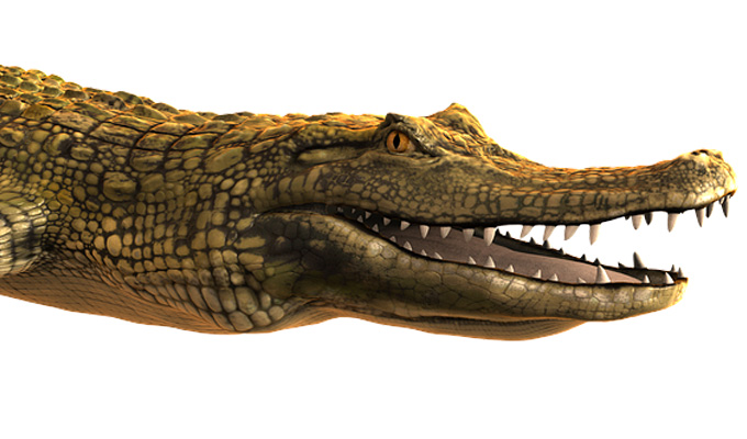 How crocodiles were invented | Tweets of the week