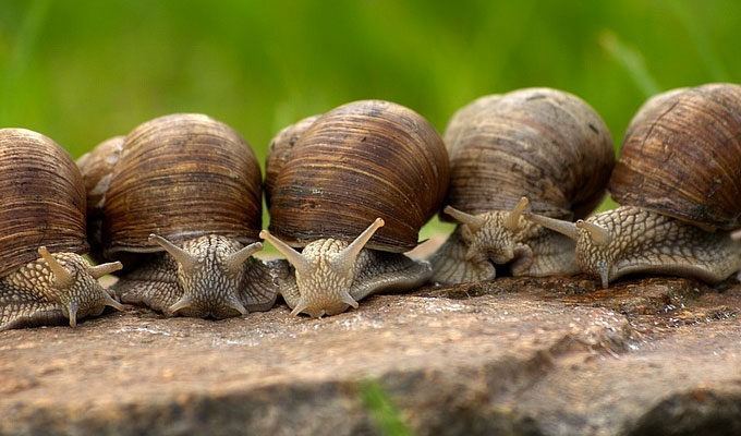 Why are slugs faster than snails? | Tweets of the week
